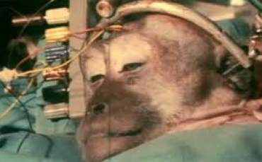 Maymuna Kafa Naklimi Yapıldı ?